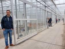 Dit bedrijf vaccineert planten, maar dat is niet onomstreden: 'We zijn wel dicht bij oplossing tomatenvirus'