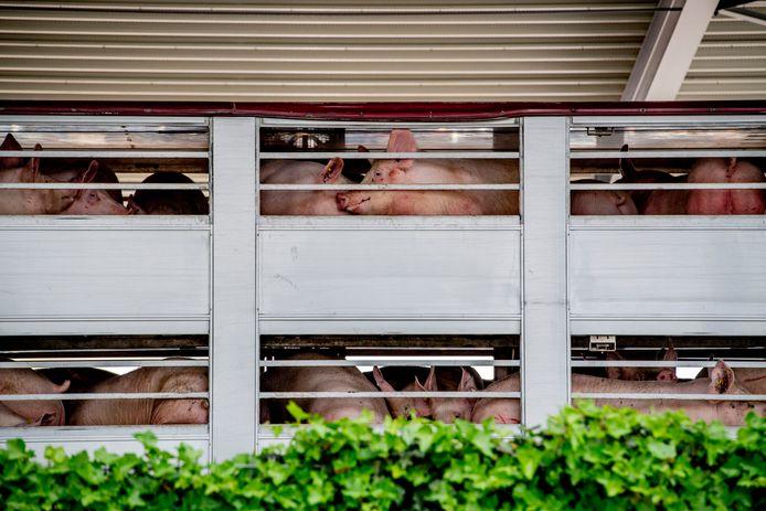 De UT-onderzoekers focusten met name op de  intensieve veehouderij als oorzaak van zoönosen.
