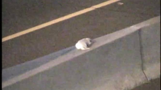 Verkeerscamera spot hond in nood - bediende schiet in actie