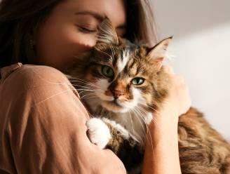 Hoe goed vertaalt nieuwe app 'MeowTalk' het gemiauw van je kat? Redactrice Stéphanie deed de test