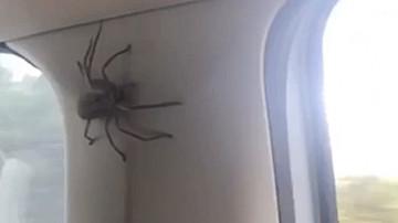 Un groupe d'amies a vécu un moment terrifiant lorsqu'une énorme araignée est apparue au-dessus de leurs têtes.