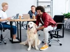 Jonge werknemer wil hulp bij omgaan met werkstress