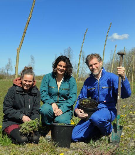 Op een steenworp afstand van de Grevelingen verrijst het grootste 'commerciële' voedselbos van Nederland