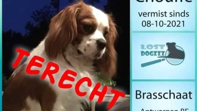 Politie Brasschaat lost 'dognapping' op: Chouffe na vier dagen weer herenigd met baasjes