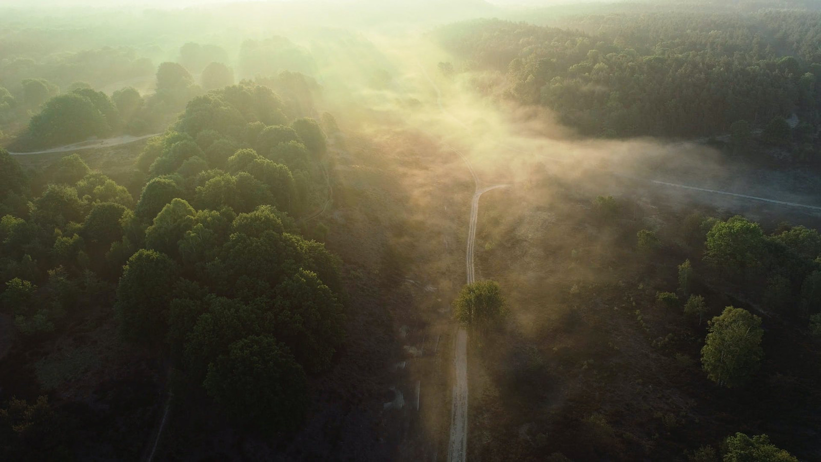 Nationaal Park Hoge Kempen.