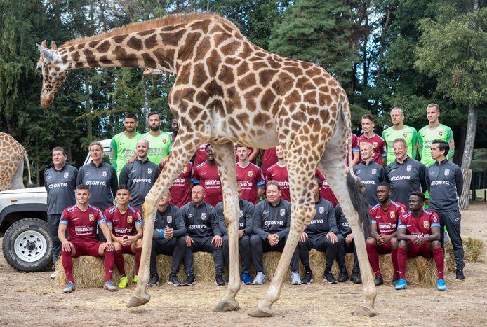 Twee jaar geleden: de selectie van Vitesse poseert tussen de dieren van het safaripark van Koninklijke Burgers' Zoo in Arnhem.
