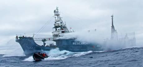 """""""La lâcheté de l'Australie face aux baleiniers japonais"""""""
