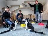 Baby Boom! Overschot aan kittens bij dierenasiel door 'coronakatten'