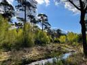 Binnen nu en zes jaar moet er 10 procent meer natuur bij in Brabant. Hier een foto van het Mastbos in Breda.