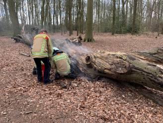 Boom in Veltembos schiet in brand, mogelijk door spelende kinderen