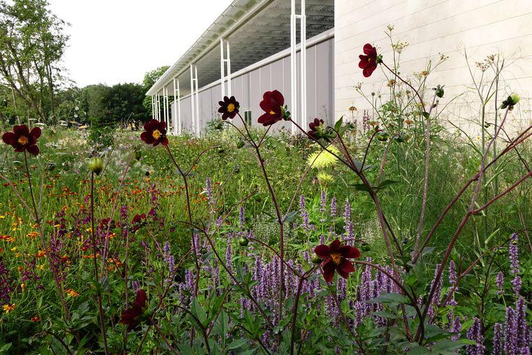 De tuin van museum Voorlinden. Beeld Piet Oudolf