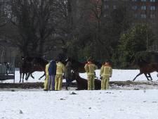 Brandweer redt paard dat urenlang gewond op het ijs ligt in Waalre