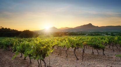 """Toeristen in Zuid-Frankrijk klagen over luidruchtige krekels: """"Burgemeester, geef ons insecticiden"""""""