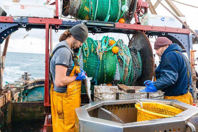 Britse vissers aan het werk op het Kanaal. Schipper Neil Witney (r) hoopt dat de brexit de Britse visindustrie, die de afgelopen decennia sterk gekrompen is, weer nieuw leven zal inblazen. Beeld EPA