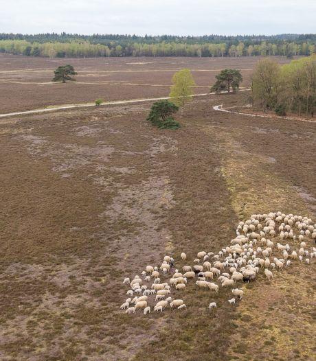 Van wildpoepen tot afvaldumpen: Veluwse bossen verrommelen door coronadrukte