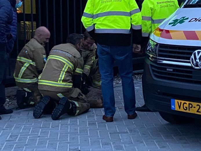 De brandweer wist het dier te bevrijden.