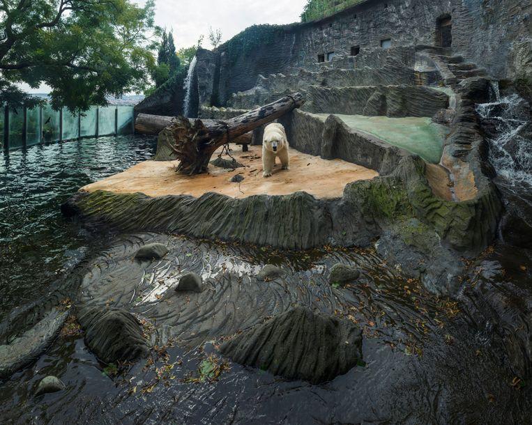 Zoo Praha, Tsjechië. Beeld Sheng-Wen Lo