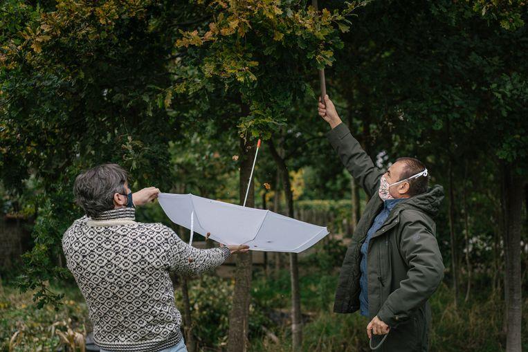 Lieven Scheire en Peter Berx demonstreren de truc met de paraplu. Beeld Wouter Van Vooren