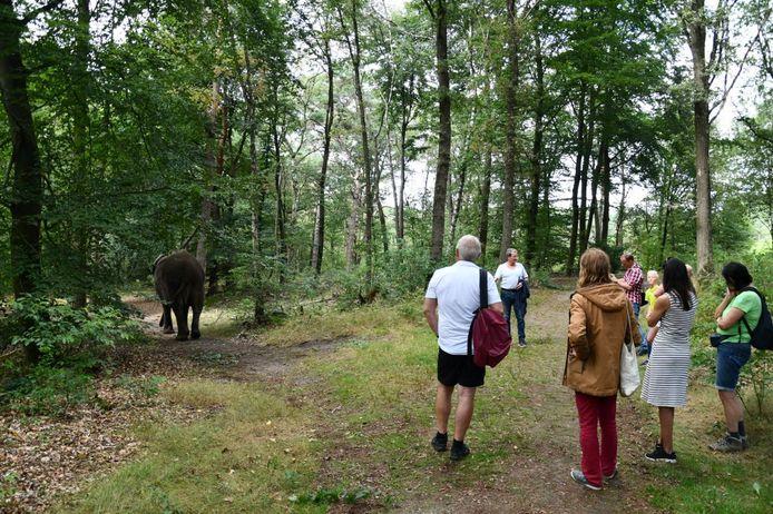 Circusolifant Buba maakte onder toezicht van zijn begeleider een ommetje, tot hilariteit van een aantal passanten.