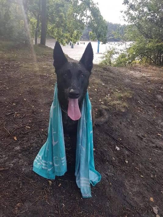 Hond Ayla werd slechts vijf jaar.