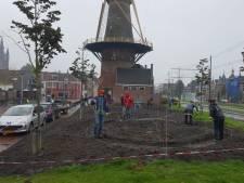 Buurt neemt tuin bij Delftse molen onder handen: 'Als er straks graan groeit, is de cirkel wel rond'