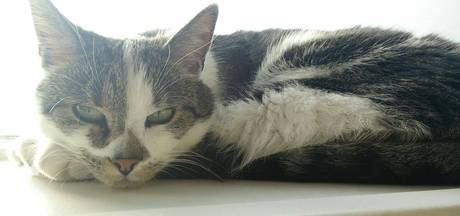 Politie jaagt op 'catkiller' in Aalten