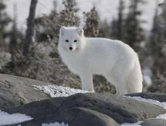 Studie: klimaatopwarming werkt verspreiding van dierenziektes in de hand en dat heeft ook gevolgen voor de mens