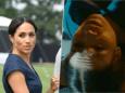 Meghan Markle victime d'un accident de voiture: la vidéo qui ne passe pas