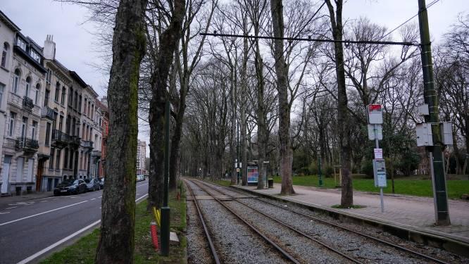 Van 26 naar 1: werken aan tramhaltes herzien, bijna alle bomen aan Elisabethpark blijven overeind