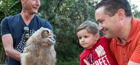 Burgers' Zoo in Arnhem koestert laatste lichting uilskuikens van hun wilde oehoe