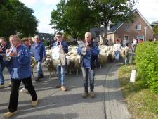 Droog en niet te heet: ideaal weer voor schaapscheerders in Loenen