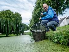 Opnieuw klachten over vestingwateren Klundert: vissers in de knel door woekerend kroos