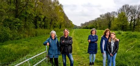 'Bomen zijn tegenwoordig een verdienmodel, dus gemeenten zijn rap met de zaag'