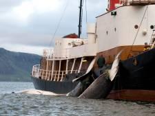 La Norvège relance la chasse à la baleine