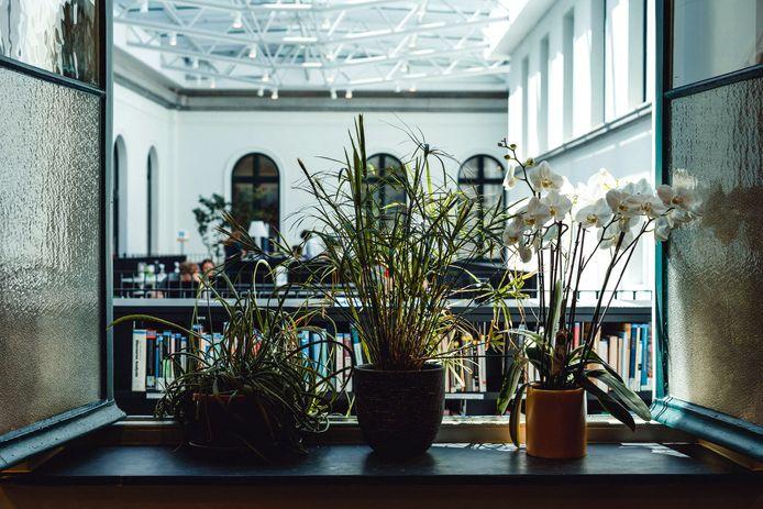 Plantenhotel in de Faculteitsbibliotheek Letteren en Wijsbegeerte.