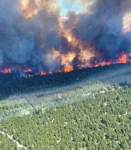 Natuurbrand verwoest heel dorp op de heetste plek van Canada