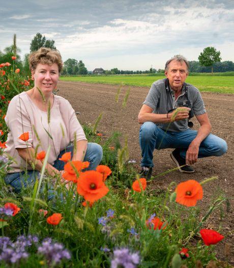 Bloeiende bloemen op boerenland: een lust voor het oog en ook voor allerlei beestjes