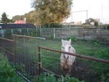 Actie tegen eenzaamheid bij paarden: 'Zet ze alsjeblieft bij elkaar'