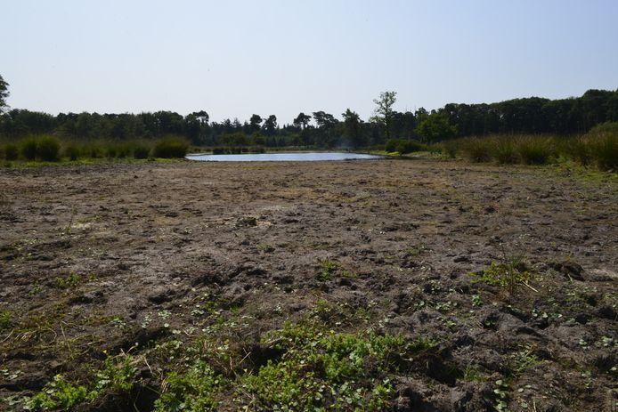 Een voor een groot deel drooggevallen ven in natuurgebied de Kampina.