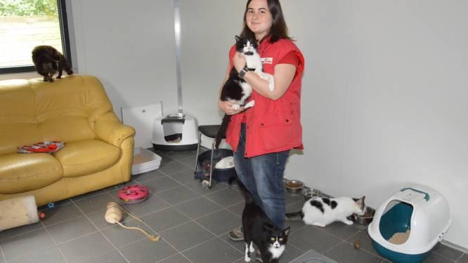 Dierenasiel straks op twee locaties: katjes verhuizen naar Outer tot infrastructuurproblemen opgelost raken