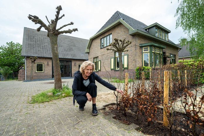 Ine Voets in de tuin in Bemmel vol betonklinkers. Foto: Gerard Burgers.