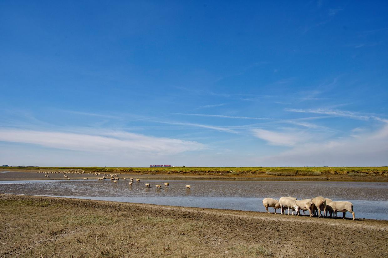 Het Verdronken Land van Saeftinghe is een natuurgebied gelegen op de grens van Nederland en België.