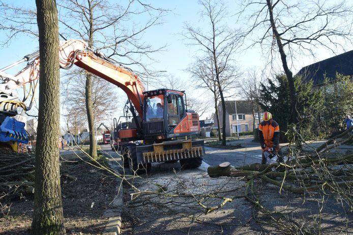 In Goirle gaan in de Guido Gezellelaan 103 bomen om.