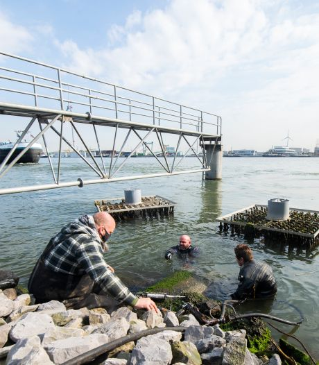 Onderzoekers UAntwerpen speuren naar garnalen, wormen en slakken in Antwerpse dokken