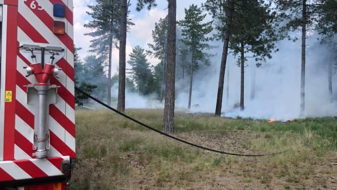 Bos vat vuur in Weelde