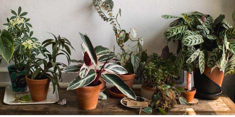 planten-stappenplan.jpg