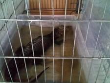 Verbod op huisalligator is nog niet haalbaar