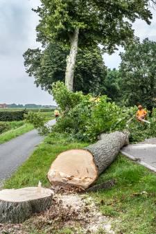 Grote zorgen om plan 13.000 bomen te kappen in West Betuwe