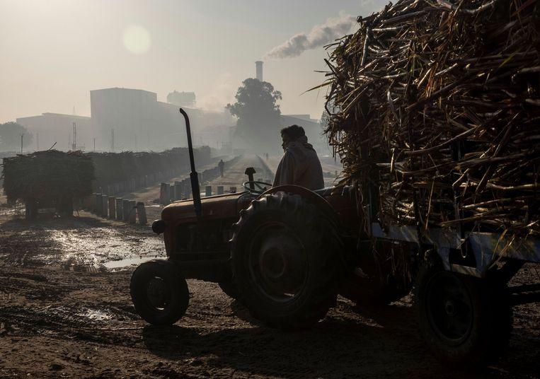 Een boer levert zijn suikerriet af bij een suikerfabriek in de Indiase staat Uttar Pradesh. Beeld Reuters