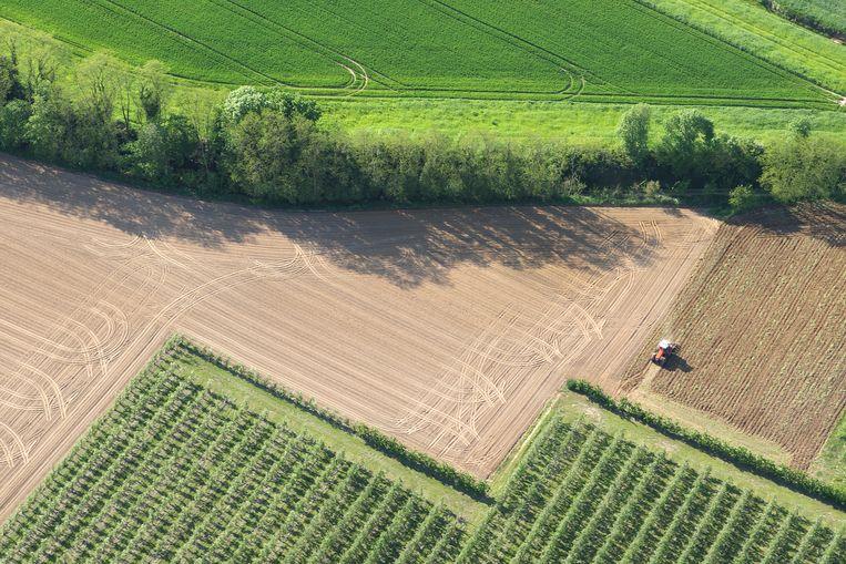 Een natuurstrook omringt dit landbouwveld in Vlaanderen. Beeld BELGAIMAGE